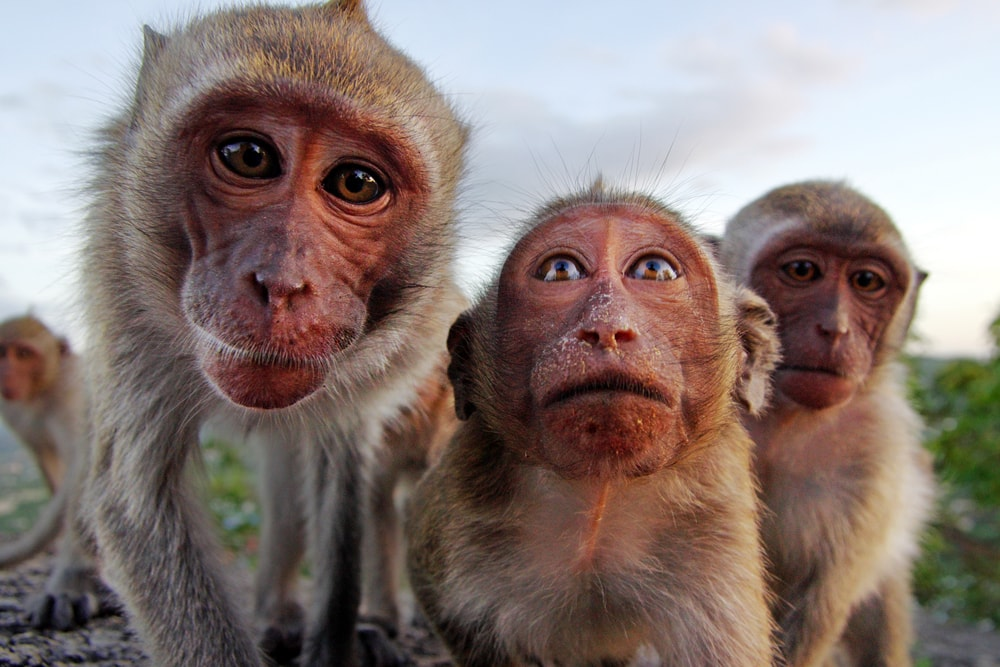 Interiør-Ape