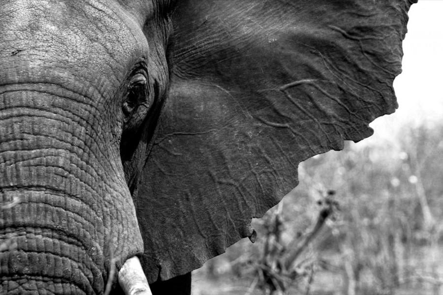 Interiør-Elefant