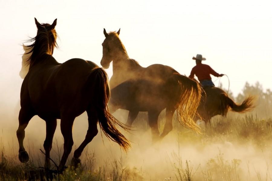 Interiør-Horses
