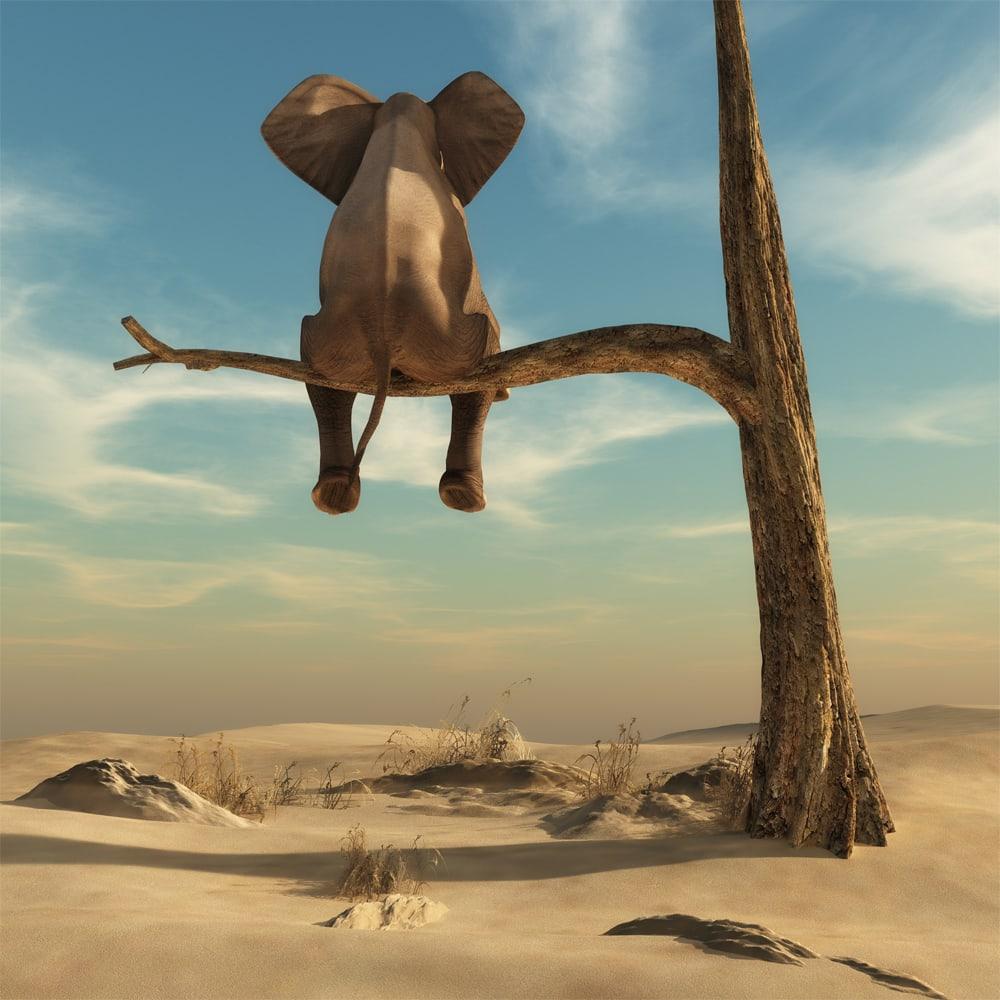 Interiør-peacful-elephant