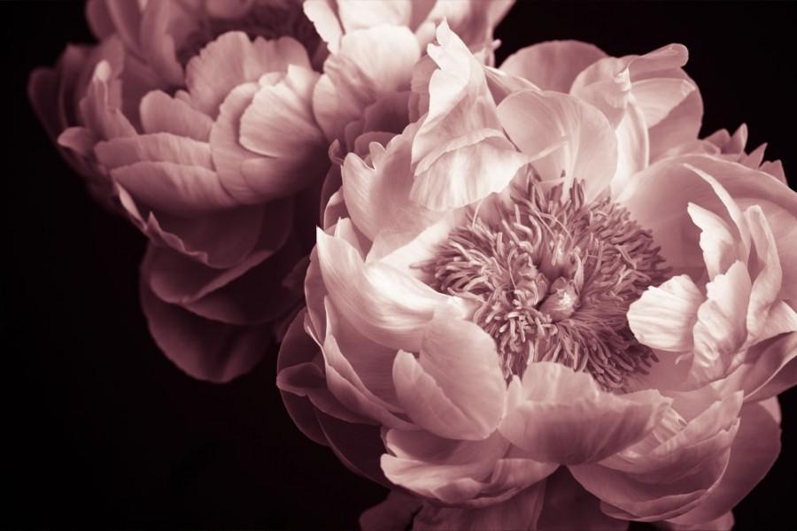 Interiør-peony-flower