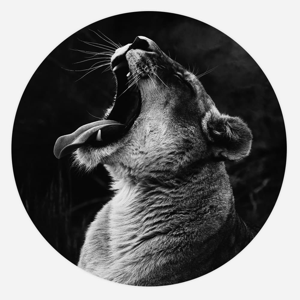 Interiør-Løve-Rund