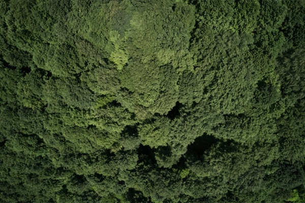 Interiør-forest