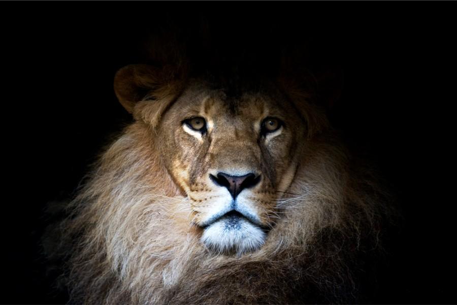 Interiør-Majestic-Lion