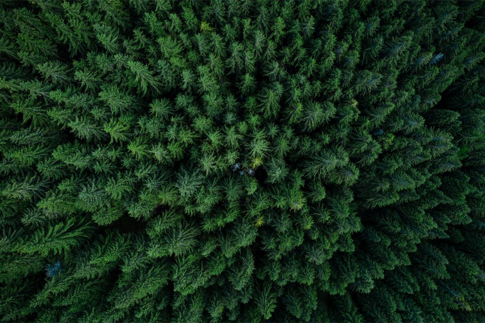 Interiør-Tree-Tops