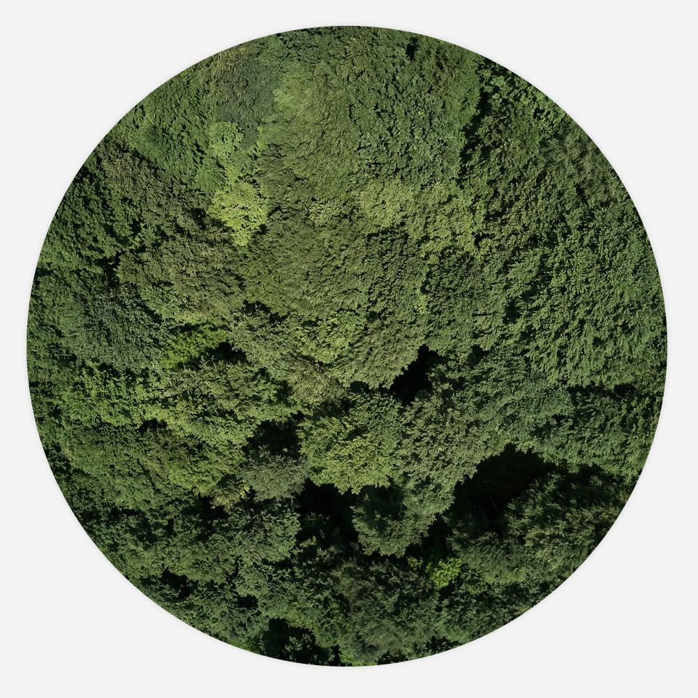 Interiør-forest-rund