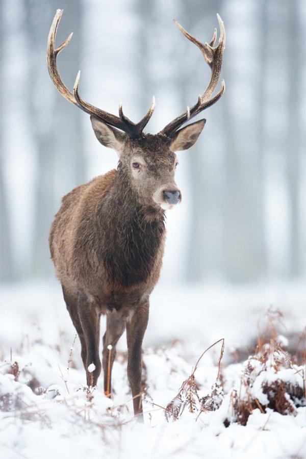 Interiør-deer