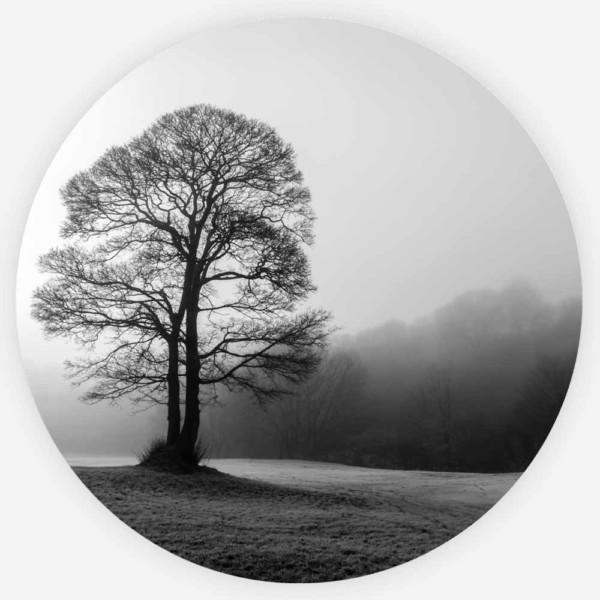Interiør-Tree-in-the-mist-Rund