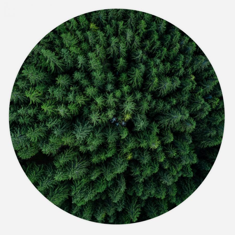 Interiør-Tree-Tops-rund
